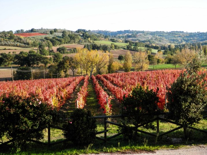 Red Vineyards, taken by Donatella Adanti