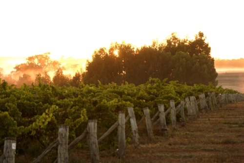 Alkoomi Vineyard Sunset
