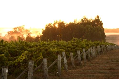 Alkoomi Vineyard Sunset