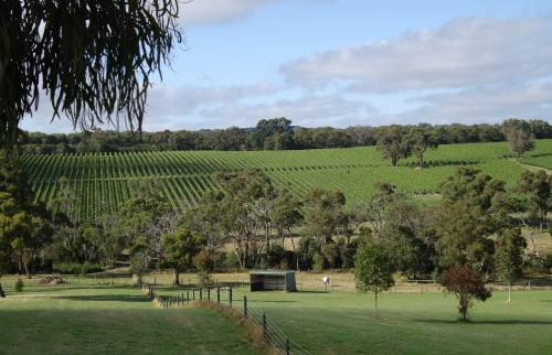 Dexter Wines Vineyard Mornington Peninsula