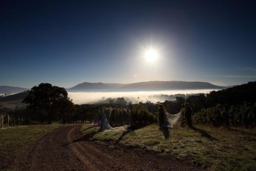 Giant Steps Vineyards