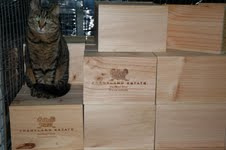 Hunter Smith Wine Cat Bazil 2