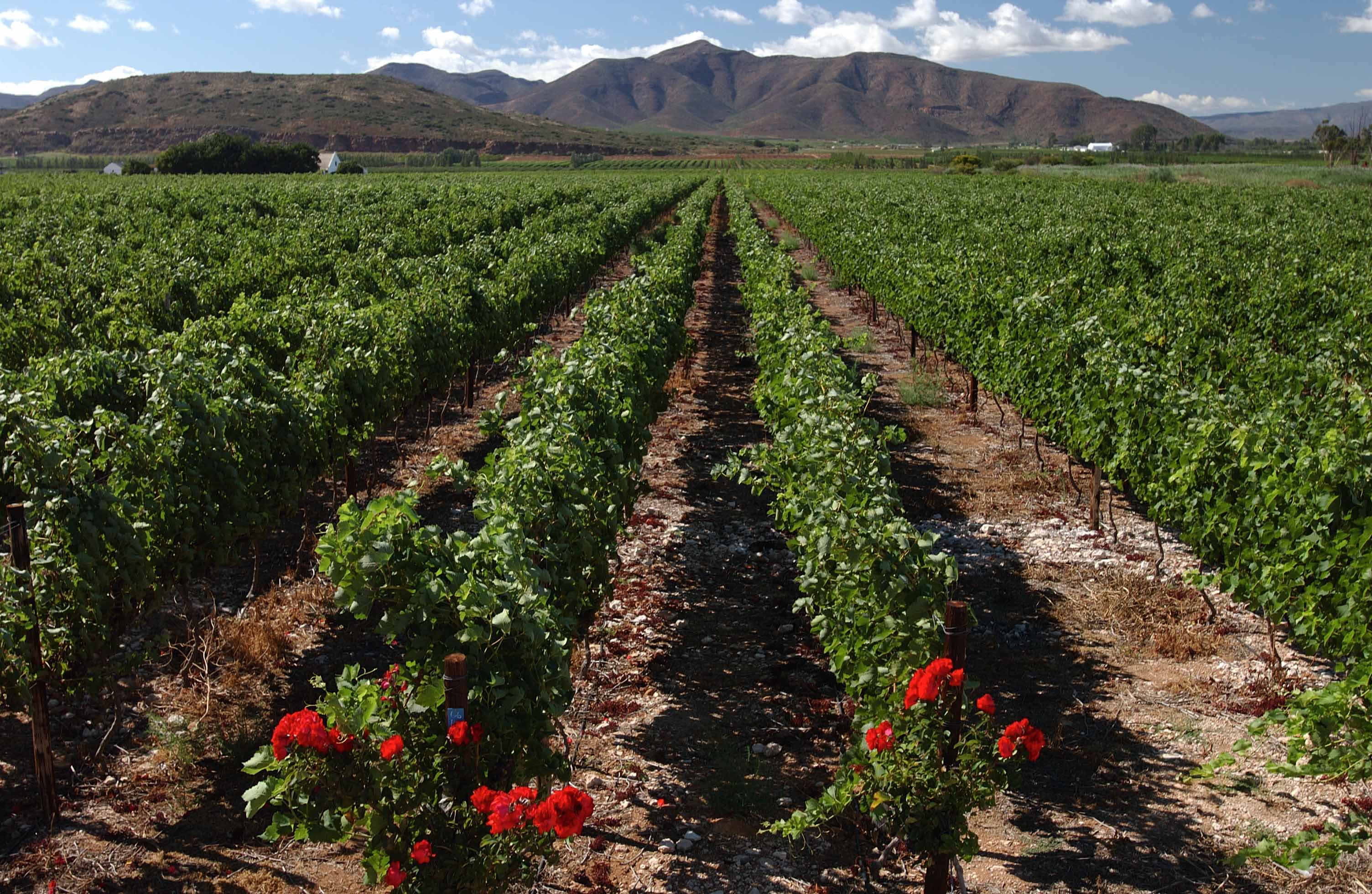 Excelsior wine estate chasing the vine for Jardin winery south africa