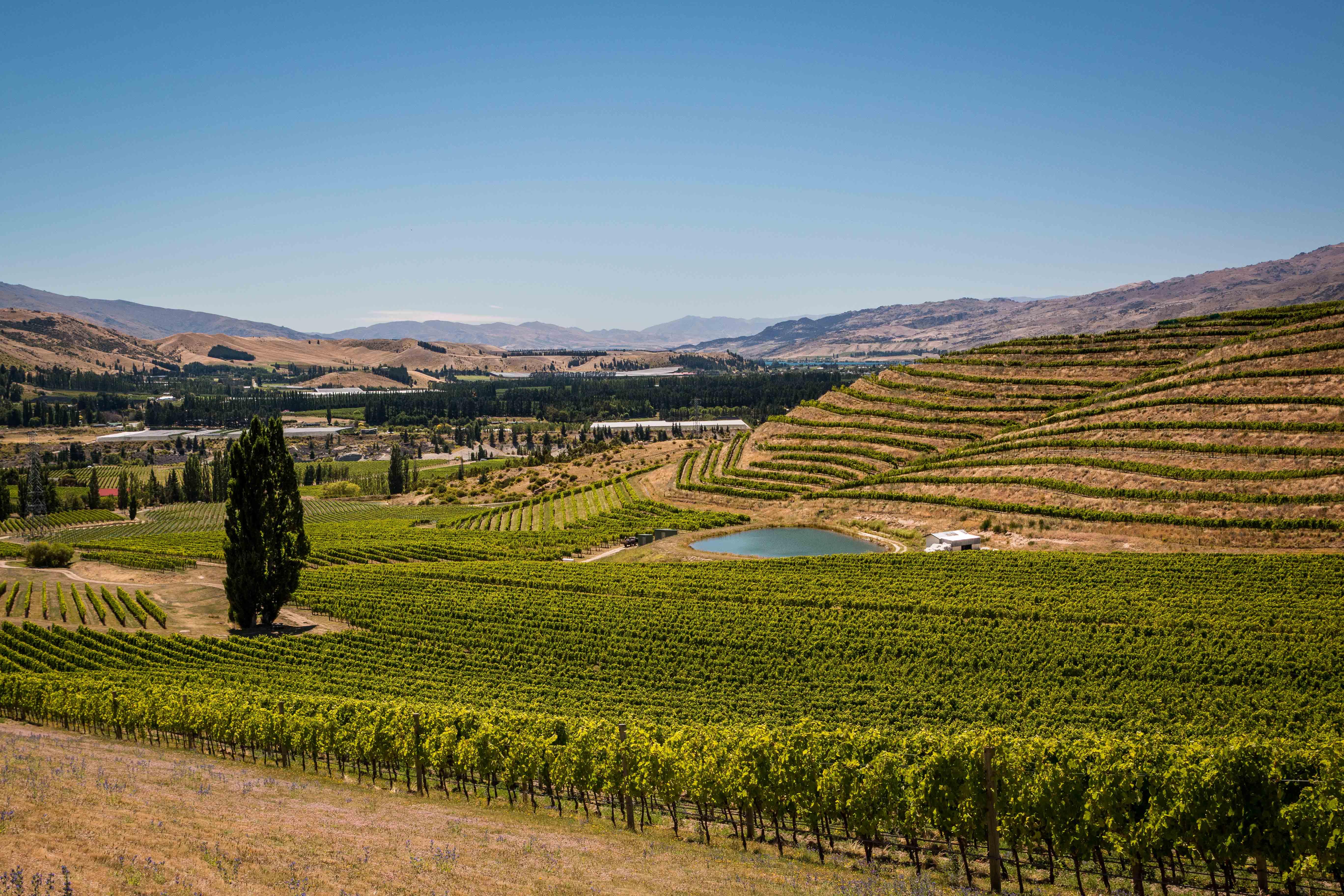 Kiwi Wine Benefits Feltonroadvineyards