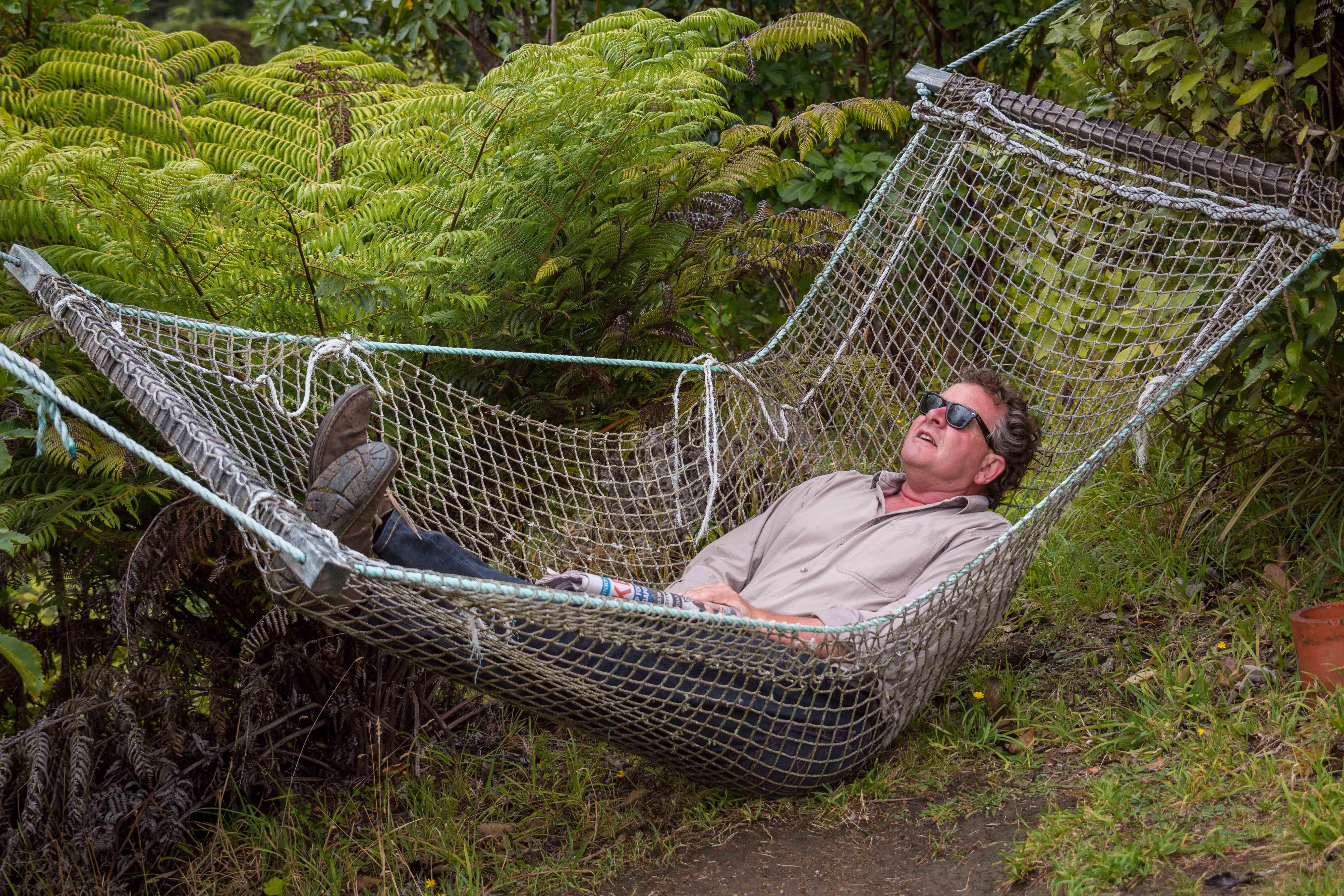 Kiwi Wine Benefits Brianhammock