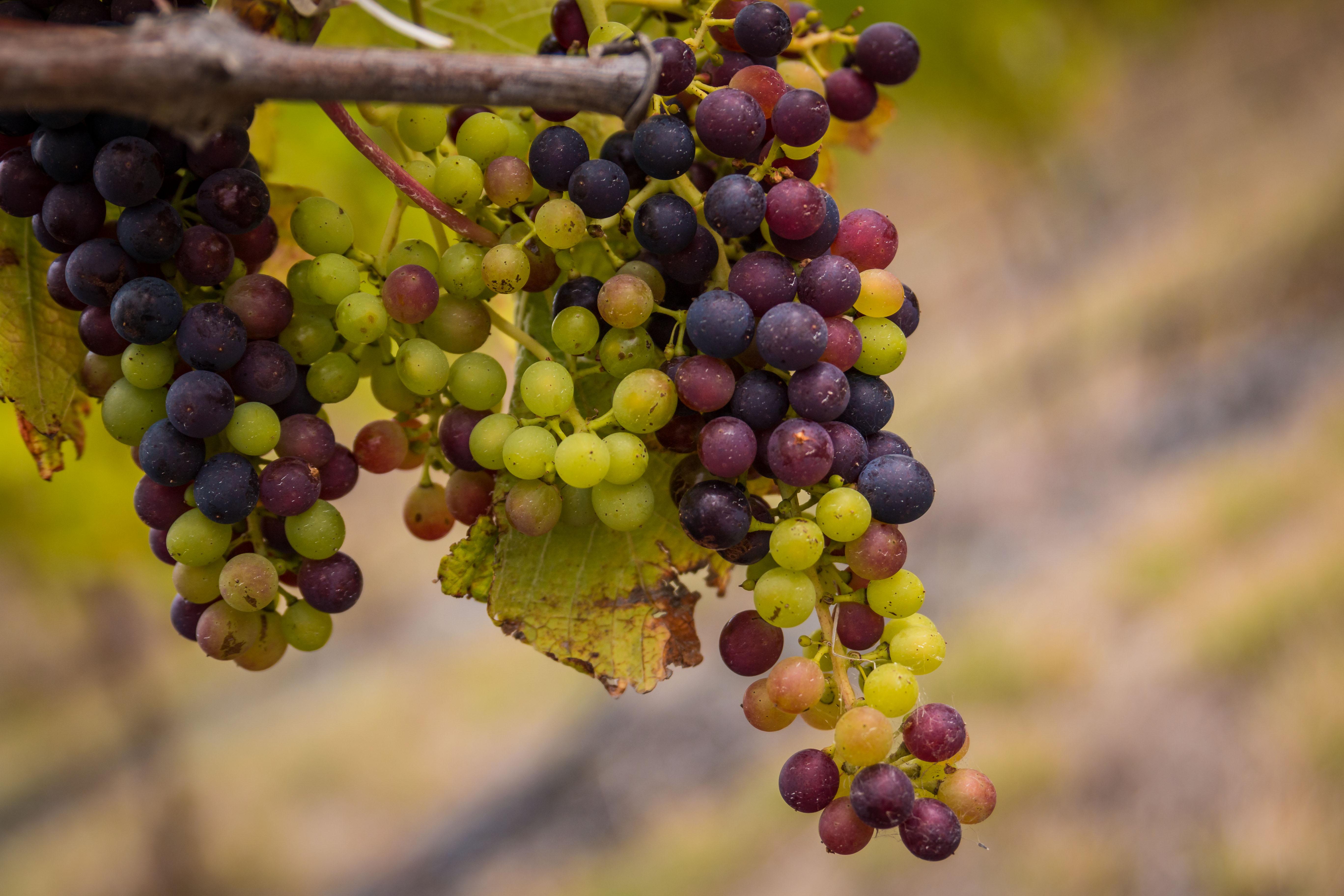 Bloomer Creek Chasing The Vine