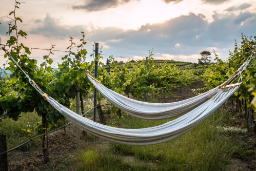 HammocksintheVineyard